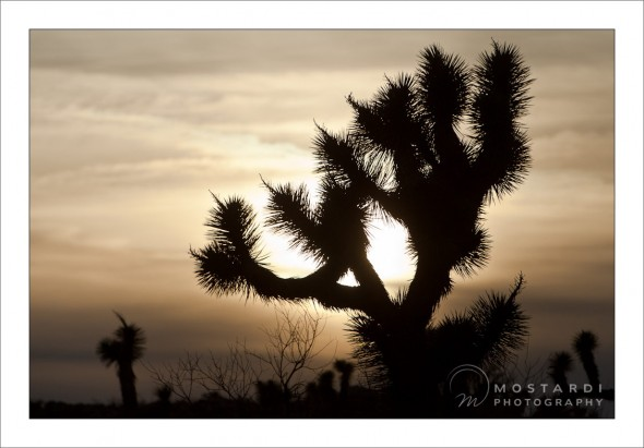 west chester photographers travel pictures joshua tree